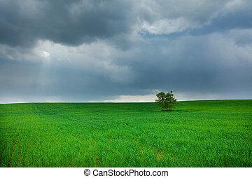 站立, 領域, 孤獨, 樹