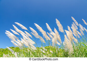 Wind blowing through flower grass under blue sky