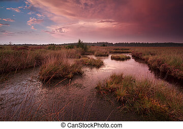 dramatic sunset over swamp