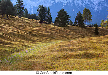 alpine meadows in Bavaria, Germany