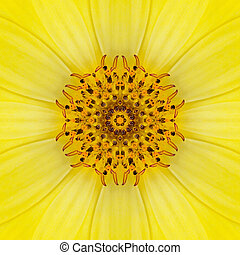 Yellow Concentric Flower Center. Mandala Kaleidoscopic...