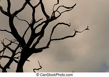 Gnarly tree silhouette - A picture of the silhouette of the...