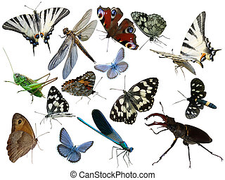 insects isolated - Butterflies, dragonfly, a grasshopper,...