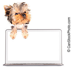 使用, 電腦, 狗