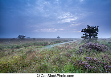 dusk over swamp with flowering heather