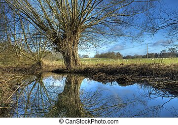 Warwickshire Willow - Willow trees at Great Alne,...
