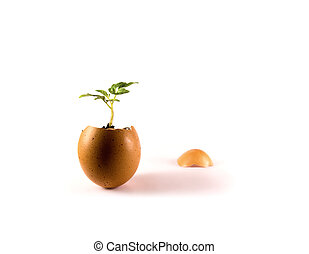 The concept of growth - A little plant grows in an egg