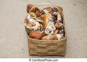 Mushrooms in basket - Top view of wild mushrooms in basket