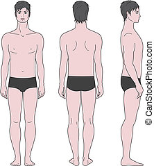 Male figure - Vector illustration of male figure Front,...