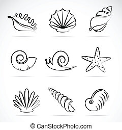 Vector collection of sea shells and snail
