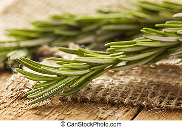 Fresh Organic Green Rosemary Sprig on a Background