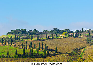 Cypresses - Plowed Sloping Hills of Tuscany in the Autumn