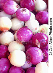 purple onion - a lot of purple onion for background