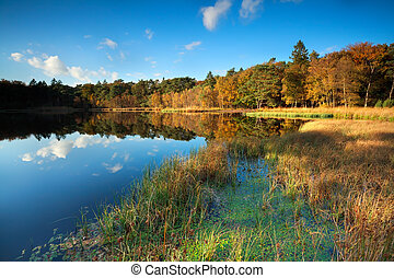 little lake in autumn forest, Roden, Drenthe, Netherlands