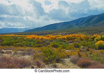 Warner Springs - Fall color in the valley at Warner Springs,...