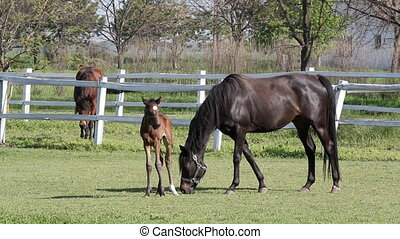 foal and horses on ranch