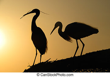 two heron gathering in the sunset - two great heron at the...