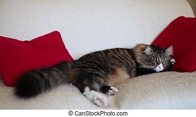 Cute Sleepy Cat On The Sofa