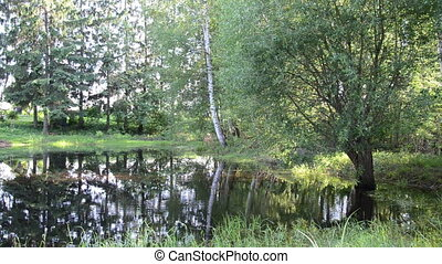 rural pond - calm summer day rural pond overgrown with grass...