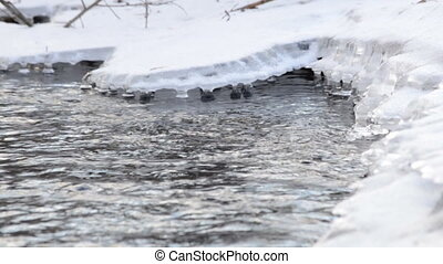 Frozen River Flow with Icicles