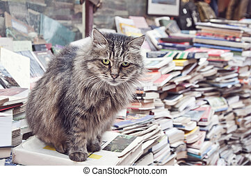Cat on the books