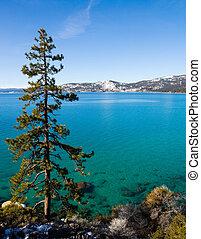 Lake Tahoe  - Lone tree at Lake Tahoe