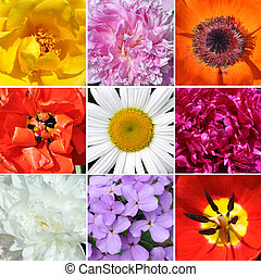 Corollas flowers - Set of images of different flowers...