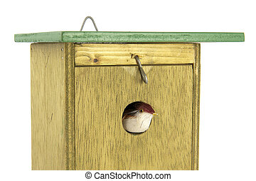 tomtit exiting wooden bird house - Tomtit exiting handmade...