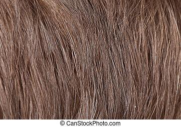 cabelo, fundo, pretas
