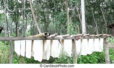 Rubber raw sheets hanging on bamboo sticks ,Thailand