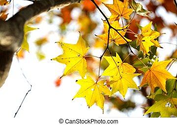 The fall season of Taiwan