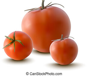 vector illustration of red tomatoes - realistic illustration...