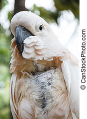 Parrot macaw - White macaw parrot, Nong Nooch Tropical...