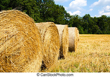 hay harvest - picture of harvested field with straw pressed...