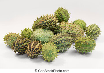 prickly cucumber fruits - a pile of wild cucumber fruits in...