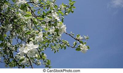 apple tree twig petal