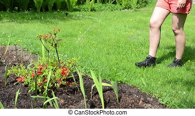 rhododendron watering - Woman legs in shorts watering orange...