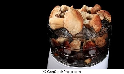 Drying mushrooms in Electric driers on the black background,...