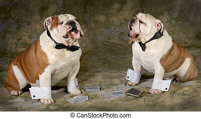 poker game - two bulldogs playing a serious game of poker