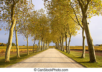 autumn lane leading to the vineyard