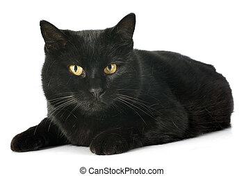 pretas, gato