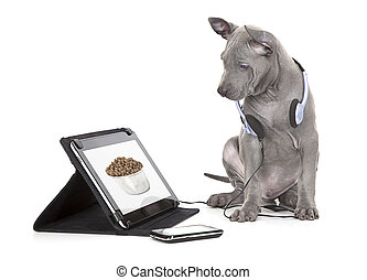 Hungry puppy looking at dog food