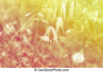 wildflowers background - wildflowers and plants background...