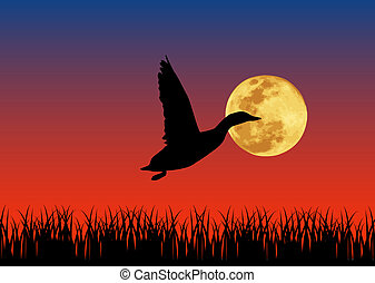 Duck  - Vector illustration of duck in the night.