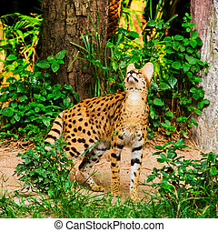 Gepard walking in green grass