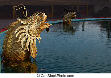 Dragon fish in the pool