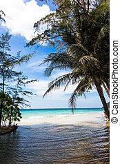 tropical beach. Beach on Ko Kood - tropical beach. Beach on...