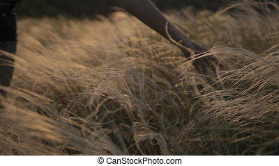 Feather grass in sunset