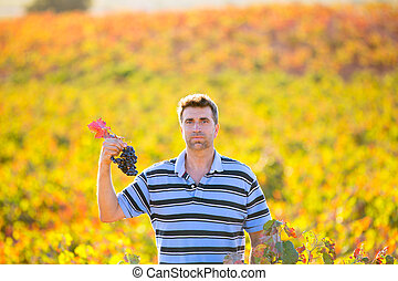Farmer man in vineyard harvest autumn leaves in...