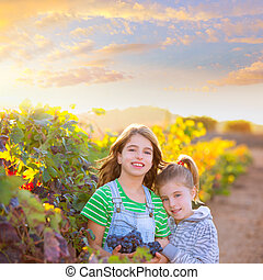 sister kid girls farmer in vineyard harvest in Mediterranean...